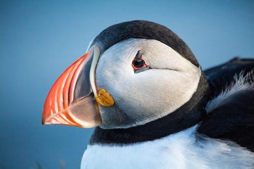 Black and White Penguin With Orange Beak