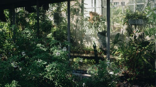 Gratis stockfoto met achtererf, achtertuin, blad, bloem