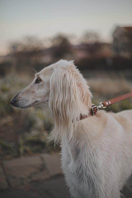 Adorable purebred dog on road under sky