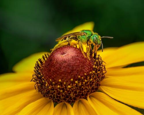 Foto profissional grátis de abelha, agricultura, alegre