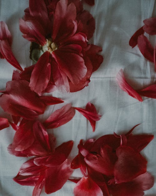 Red Flowers on White Textile