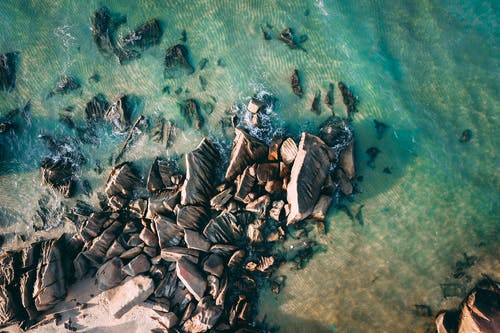Brown and Black Fishes on Water