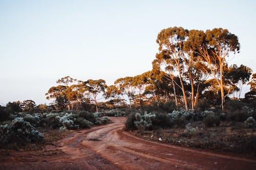 Ilmainen kuvapankkikuva tunnisteilla auringonvalo, australia, botaniikka, eksoottinen