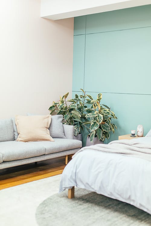 Interior of light bedroom with comfortable bed with white linen placed near sofa and potted green plants