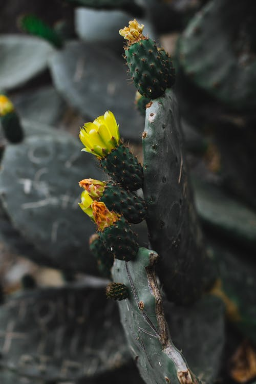 Green cactus with yellow flowers