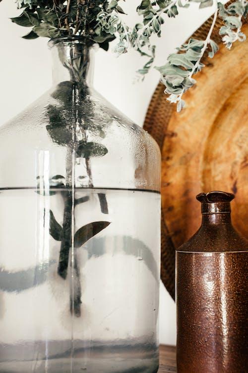 Eucalyptus sprigs in glass vase at home