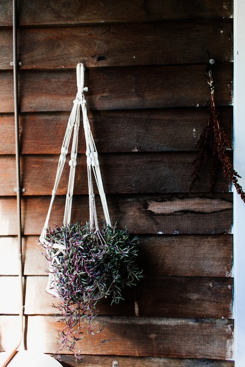 Straw basket with climbing green plant hanging on wall of rustic house in sunlight