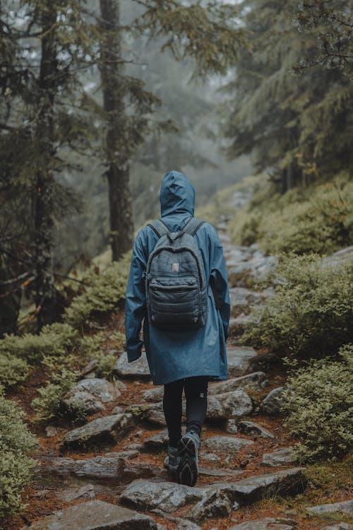 ハイキング, フォレストパーク, 林道, 森林の無料の写真素材