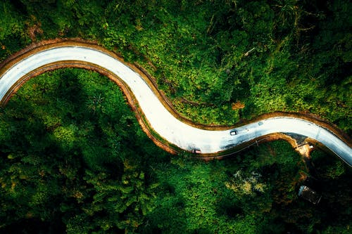 Car driving along curvy road in lush forest