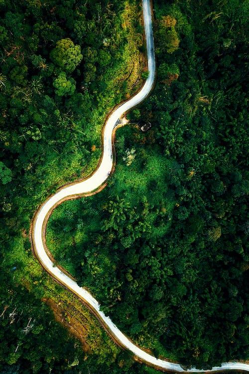 Empty narrow road between verdant forest