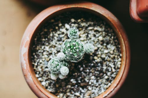 Top View of a Cactus on a Pot
