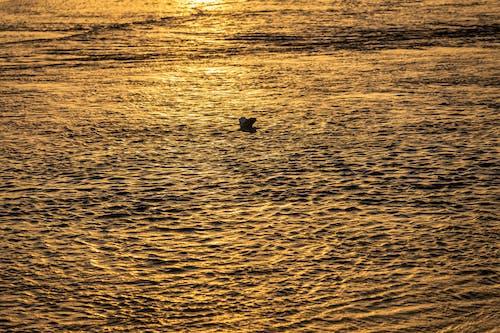 Gratis lagerfoto af gylden sol, pexels, pexels meetup, pexelschegou