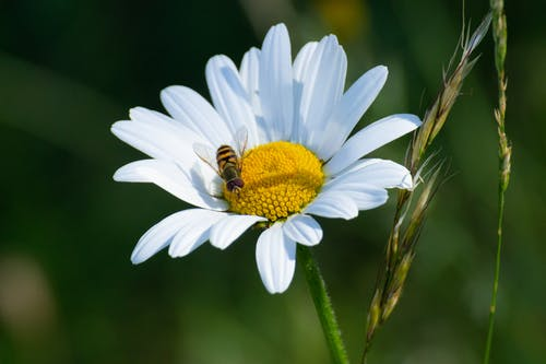 Free stock photo of bee, close up, flower
