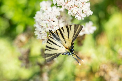 Free stock photo of butterfly, close up, flower