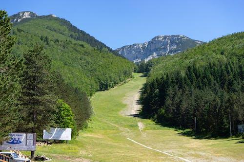 Free stock photo of blidinje, green, nature