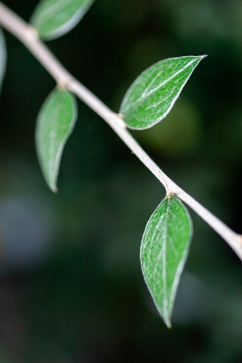 Bright foliage with veins on fragile branch on blurred background of natural environment