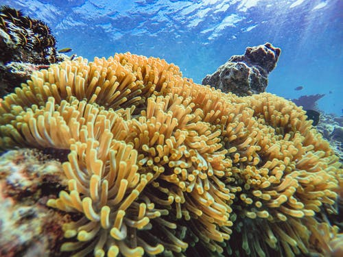 Brown Coral Reef Under Water