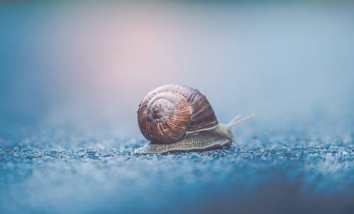 Small snail crawling on asphalt surface