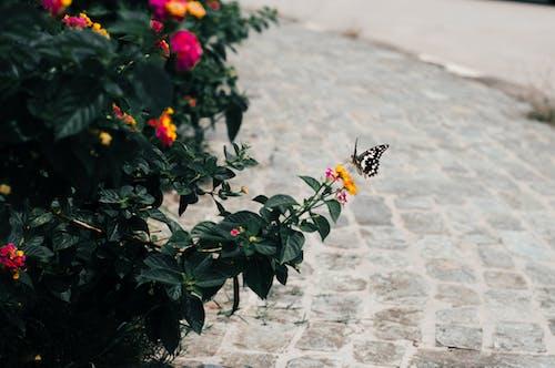 Photos gratuites de fleur, fleurs, insecte, insecte volant