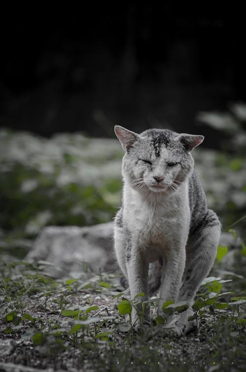 Δωρεάν στοκ φωτογραφιών με Γάτα, γατάκι, γάτες της παλιάς πόλης