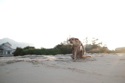 Fotos de stock gratuitas de perro, perro blanco, perro mono, perro sentado