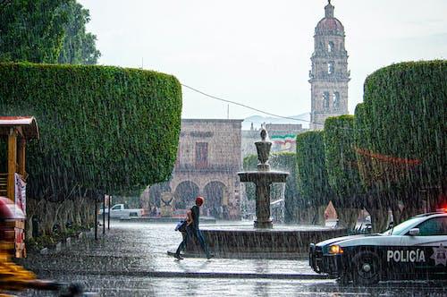 Foto profissional grátis de andando, árvores, caminhando, chuva