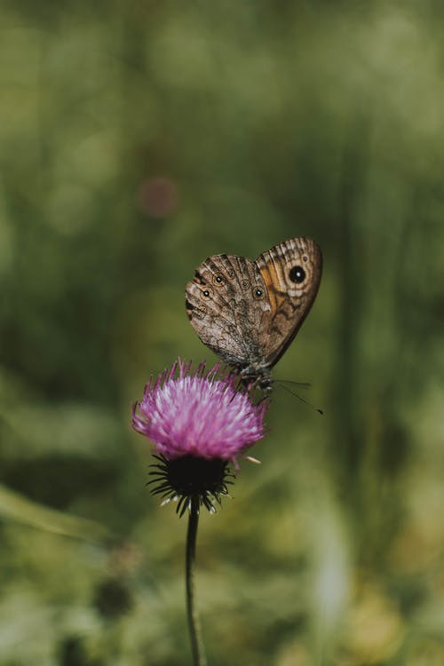 Tiny spotted butterfly sitting on small plant with pink flower on thin fragile stem in soft focus