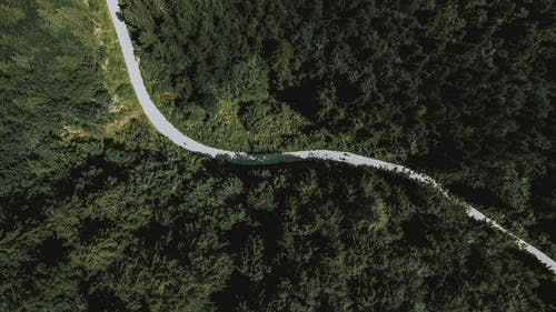 Top view of asphalt narrow route running through coniferous woods on sunny day