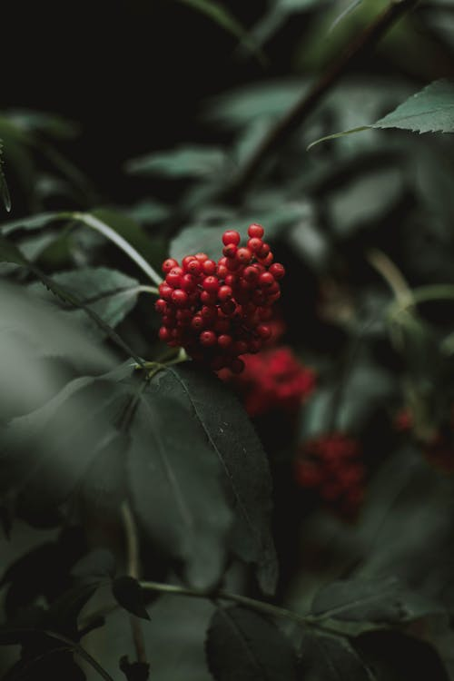 Branches of wild berries with green leaves