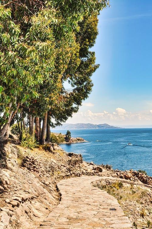 Foto profissional grátis de água, ao ar livre, árvore, baía