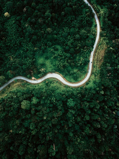 Drone view curvy road running through lush woodland