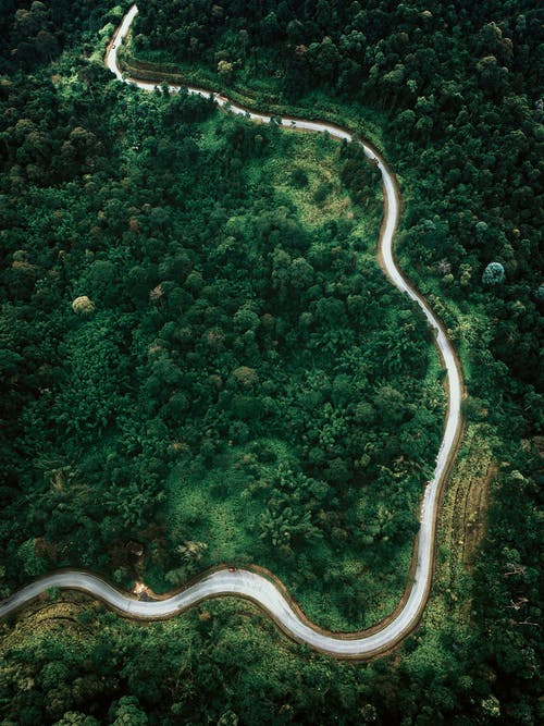 Aerial View of Road in the Middle of Green Trees