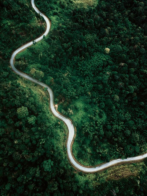 Aerial view of narrow asphalt highway going through lush verdant woodland trees on clear summer day