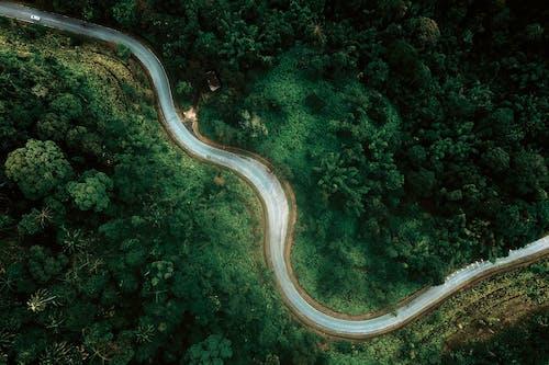 Winding roadway among green lush trees