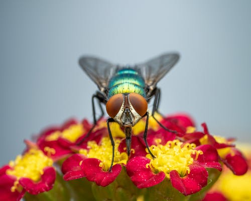 Fly sitting on bright flowers