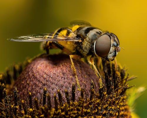 Amazing hoverfly on fresh flower