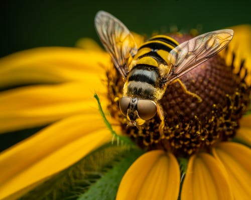 Flower and hoverfly in nature