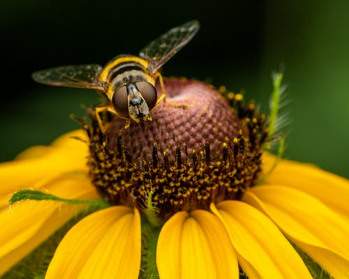 Hoverfly on natural yellow flower