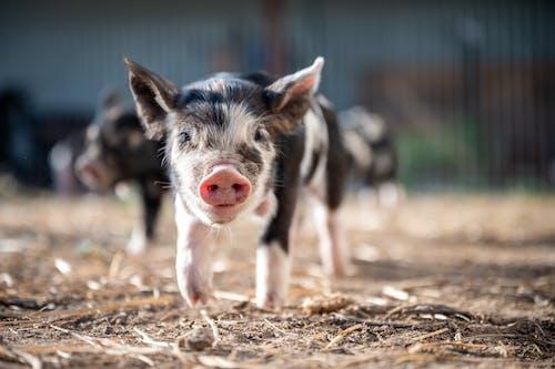 Ingyenes stockfotó állat, állatállomány, álló kép, aranyos témában