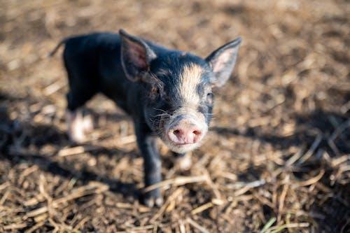 Ingyenes stockfotó állat, álló kép, aranyos, baba témában