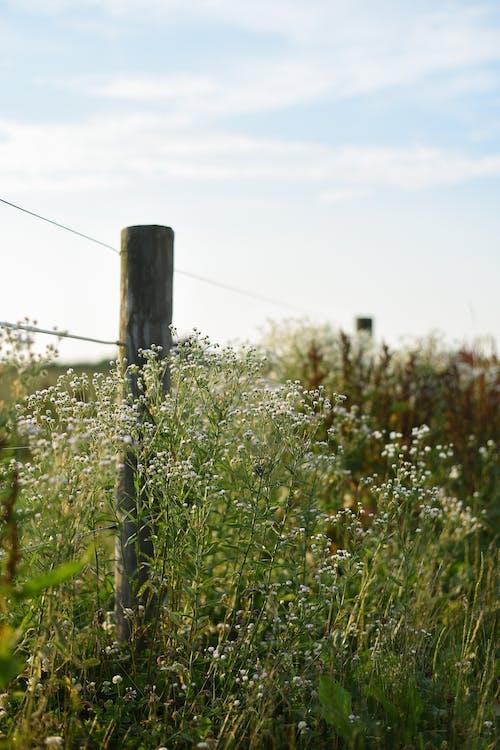White yarrow flowers near fence