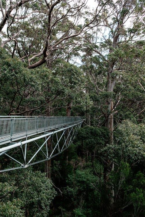 Immagine gratuita di abbondanza, albero, ambiente