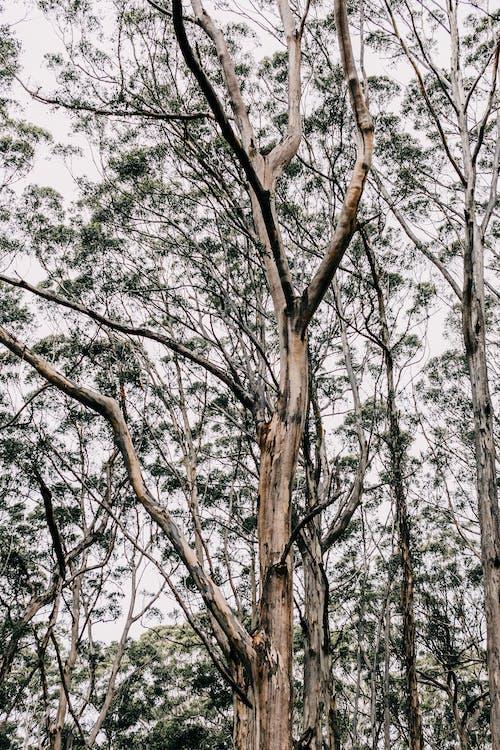 Foto profissional grátis de alto, ângulo baixo, ao ar livre