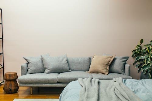 Cozy sofa and bed in contemporary studio apartment