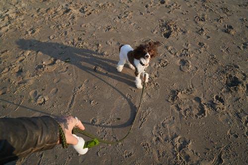 Foto profissional grátis de água, amor, animal, ao ar livre