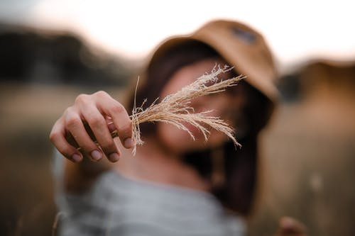 Anonymous female with brown hair in hat standing in field and holding bunch of dried grass in hand