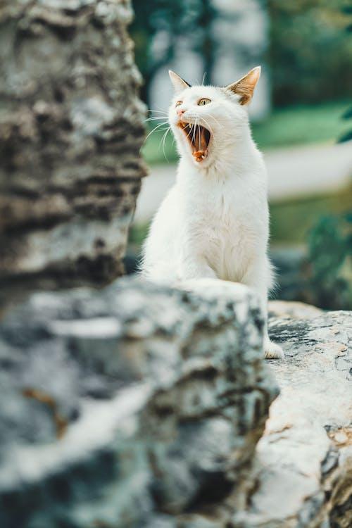White Cat on Gray Rock