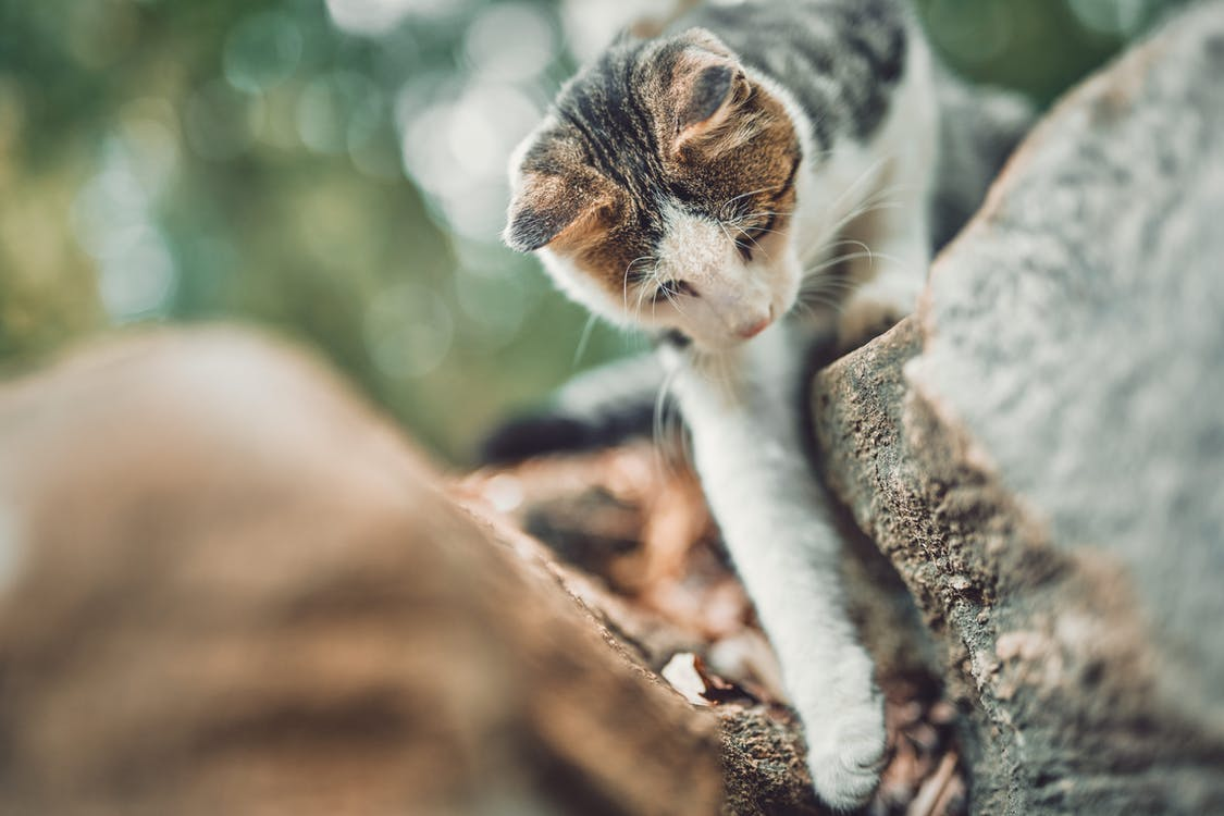 White and Brown Cat on Tree Trunk