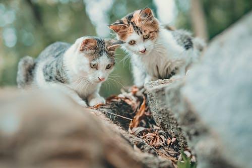 Photos gratuites de amusant, animal, animal de compagnie