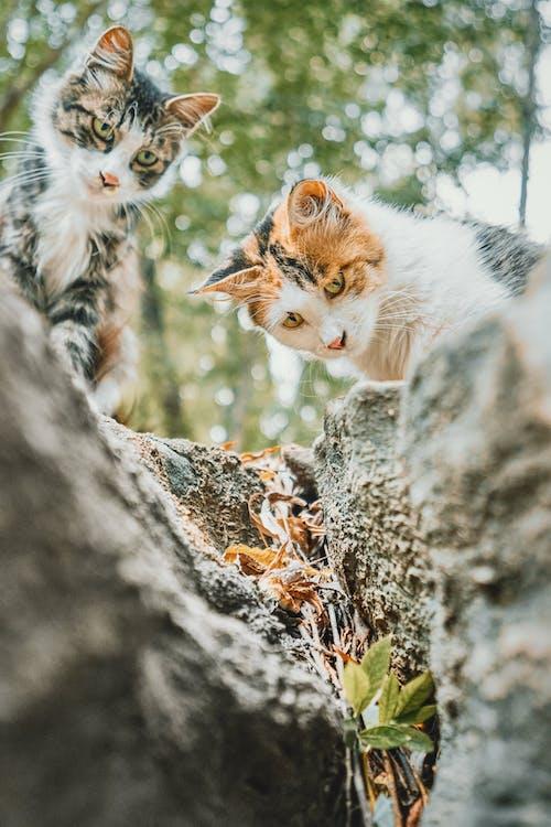 Photos gratuites de amusant, animal, arbre